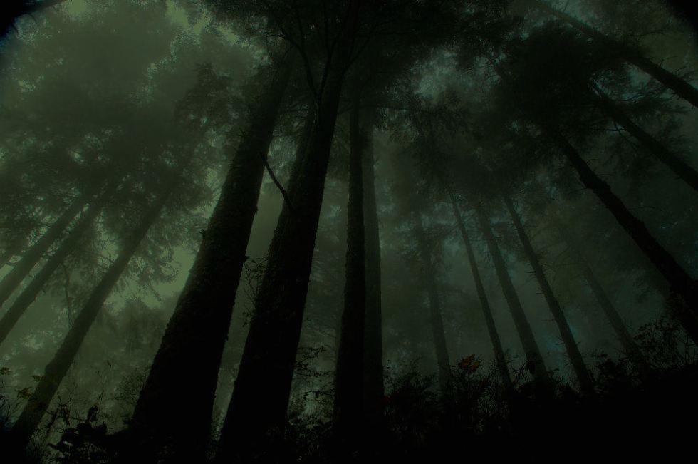 treedarkforest.jpg